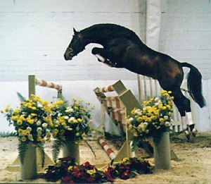 Image of the elite Oldenburg stallion, Beach Boy, jumping a large double jump.