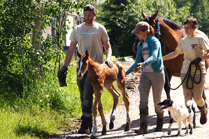 Staff walking with a newborn foal.