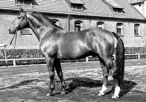 Side profile of Hanoverian stallion Arkansas' sire, Alderlass.