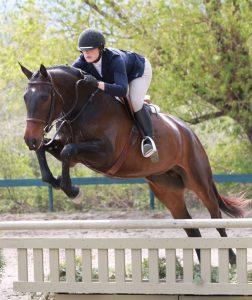 Canadian Warmblood mare, Bostyn jumping a fence.